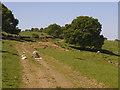 SE2843 : Lambs on Bank Top Lane by Stephen Craven