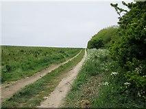 TA1181 : Field  edge  track  near  Filey by Martin Dawes