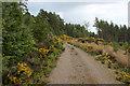 NH7276 : Track in Scotsburn Wood by Chris Heaton