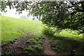 ST3299 : Footpath from Sluvad Wood by M J Roscoe