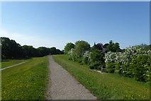 SE5853 : Path along the embankment by DS Pugh