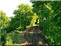 SY2593 : Crownhayne Loop, Seaton Tramway by Brian Robert Marshall
