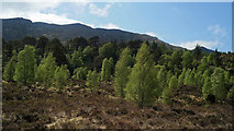 NH1621 : Natural woodland above Loch Affric by Julian Paren