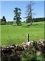 NN8767 : Trees in field beyond low wall by Trevor Littlewood
