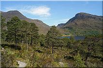 NH0064 : Scots Pine beside the Beinn Eighe Reserve Mountain Trail by Julian Paren