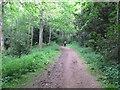 NT7134 : Woodland path, Floors Castle Park by David Hawgood