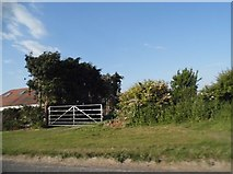 TL3142 : Field entrance on Royston Road, Litlington by David Howard