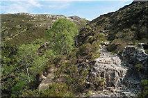 NG9864 : Mountain Trail of the Beinn Eighe Reserve by Julian Paren