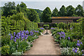 SU8612 : Iris borders in the Walled Fruit Garden, West Dean Gardens  by Ian Capper