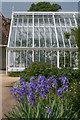 SU8612 : Iris border in the Walled Fruit Garden, West Dean Gardens  by Ian Capper