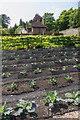 SU8612 : The Kitchen Gardens, West Dean Gardens by Ian Capper
