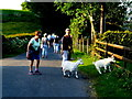 H4479 : Friendly goats, Dunmullan by Kenneth  Allen