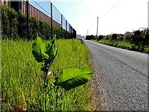 H5575 : Striff Lane by Kenneth  Allen