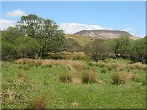 NR4652 : Woodland at Dùnan an t-Soluis by M J Richardson