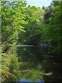 SW6920 : Bonython Estate Gardens - Quarry Lake by Chris Allen
