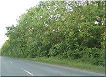 TL2658 : The B1040 south of Eltisley by David Howard