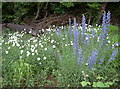 ST4967 : Backwell quarry flora by Neil Owen