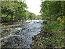 SX7467 : River Dart by Buckfast Abbey by Maurice D Budden