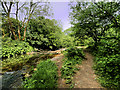 SJ9099 : Medlock Vale, River Medlock by David Dixon