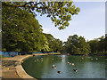 SE1535 : Geese on the boating lake, Lister Park  by Stephen Craven