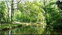 SO8785 : Stourbridge Canal, east of Middle Bridge by Christine Johnstone