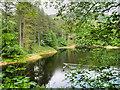SK1789 : Upper Derwent Valley, Ladybower Reservoir by David Dixon