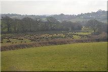 SX5857 : Rough grassland by N Chadwick
