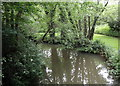 TQ5812 : Cuckmere River near Hellingly by PAUL FARMER