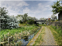 SD7909 : Manchester, Bolton and Bury Canal at Bridge#20 (Benny's Bridge) by David Dixon