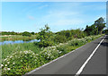 SY6780 : Cycleway, Radipole Park Drive by Des Blenkinsopp