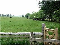 NZ0285 : Footpath on Broomhouse Farm by Andrew Curtis