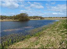 NT4681 : Marl Loch near Aberlady Bay by Mat Fascione