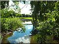 TQ1682 : River Brent near Ealing by Malc McDonald