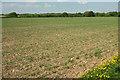 SS4015 : Field near Bulkworthy Moor by Derek Harper