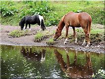 H4772 : Horses, Campsie by Kenneth  Allen