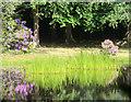 SU9564 : Leech Pond by Des Blenkinsopp