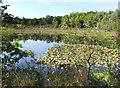 SU9664 : Pond below Birch Hill by Des Blenkinsopp