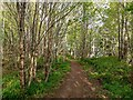 NC8400 : Path in Cnoc na Croiche by valenta
