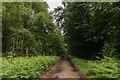 TQ0849 : Netley Park by Ian Capper