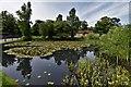 SU9635 : Chiddingfold Village Pond 3 : Week 24