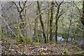 SX5265 : River Meavy through trees by N Chadwick