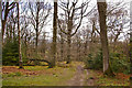 SO4972 : Haye Park Wood by Ian Capper