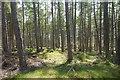 NN5859 : Larch wood, Aulich Hill by Richard Webb