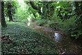 SP5830 : Stream running through Twigyard Wood by Philip Jeffrey