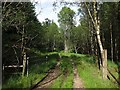 NN0740 : Track, gate and forest near Loch Etive by wrobison