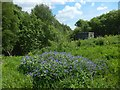 NS3976 : Perennial Cornflower at Gooseholm pumping station by Lairich Rig