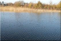 TR3453 : Lake, Betteshanger Park by N Chadwick
