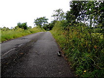 H5559 : Tycanny Road, Tycanny by Kenneth  Allen