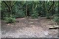 SP1096 : Woodland edge in Sutton Park by Bill Boaden