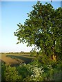 TL5173 : A small tree and its long shadow, off Green End by Christine Johnstone